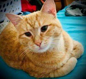 Aker Dr Hartford cat
