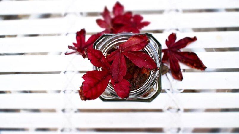 Fall Maple Leaf Transition Skincare Tips